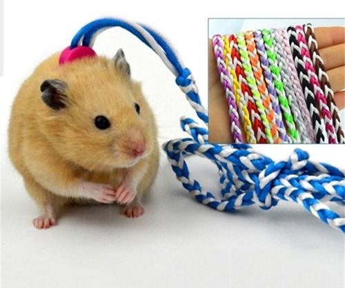 chuột hamster có ăn con mới đẻ không