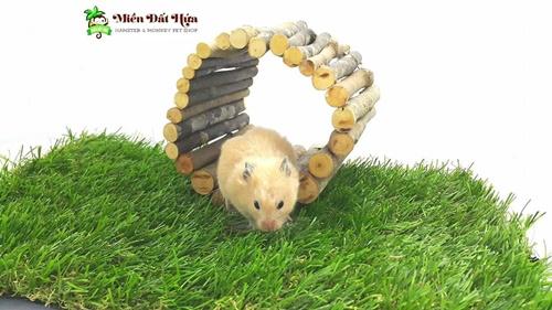 cách nuôi chuột hamster mới đẻ