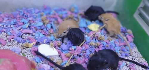 cách nuôi chuột hamster mới sinh